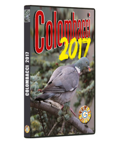 Colombacci 2017
