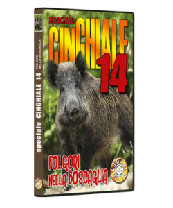 Speciale CINGHIALE 14
